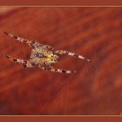 hey, zeg spinnetje waar ga je heen?