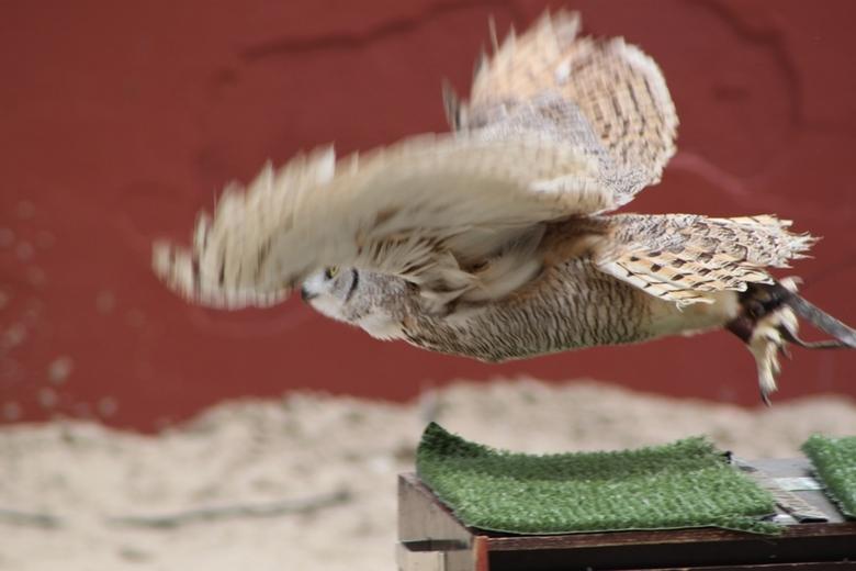 Lift off - Vogelshow in het Archeon