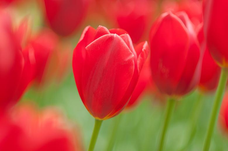 De Kleur Rood : Rood is de kleur van natuur foto van johanvb zoom