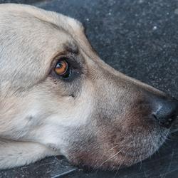 Brave hond...