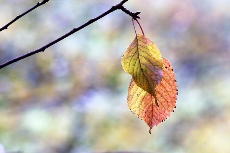 50 Shades of Autumn