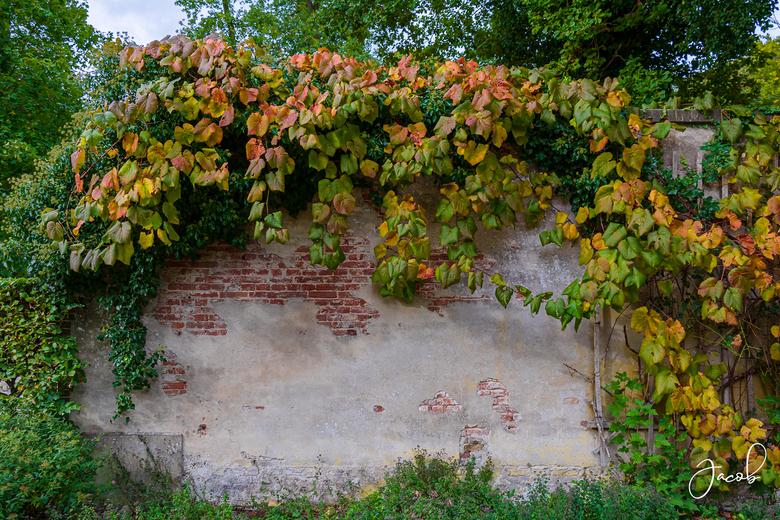 Herfst klimt over de muur - Afgelopen herfst klommen deze blaadjes over de tuinmuur heen.