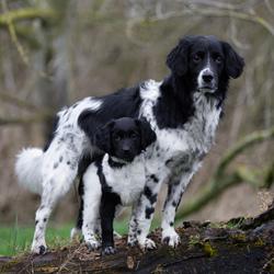 Puck met haar grote broer