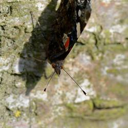 Zonnende vlinder 2