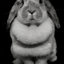 nibbit