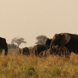 trunks at Chobe