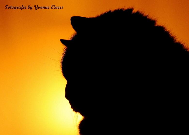 My sunshine - Mijn zonnestraaltje ...