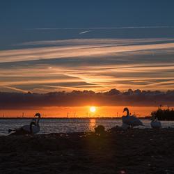 Het Zwanenmeer (in Harderwijk)