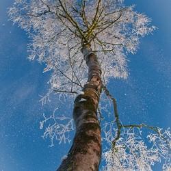 Winterberk