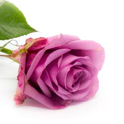 bloemenpurple-8436