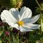De laatste bloemen bloeien nog (12)