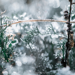Wintertuin