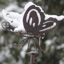 Vlinder in de sneeuw