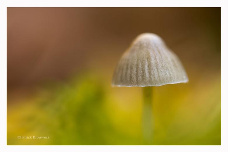Soft Autumn. - Bedankt voor jullie reacties op mijn vorige foto.<br /> <br /> Groet Patrick.