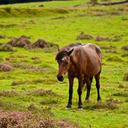Paard op de Posbank