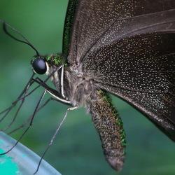 Vlinders aan de Vliet -9 en slot-