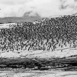 Vogels in Ushuaia