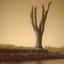 boom op een strekdam