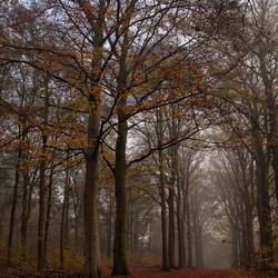 Wandelen in het bos...