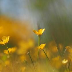 In Het Gele Veldje...