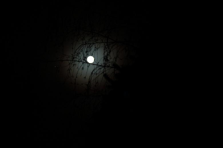 De maan 29 (2).JPG - Zie de maan schijnt door de bomen.