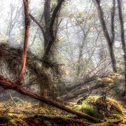 Sprookje in het bos.
