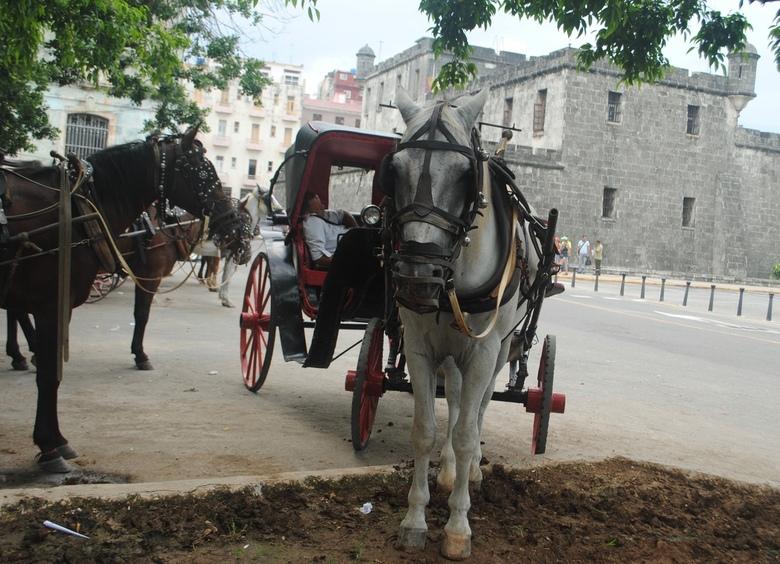 Havana - paard en wagen -