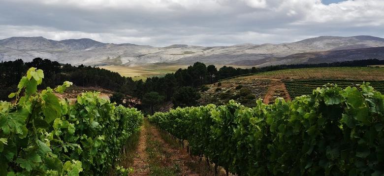 001 - Creation Wines, Heaven & Earth Valley, Zuid-Afrika - Verrukkelijke Creation Wines in de Hemel en Aarde Vallei, Zuid-Afrika