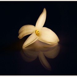 hyacint 2