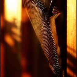 web licht