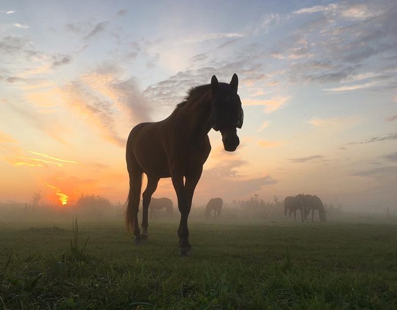 Grondmist - Mooie zonsopkomst met grondmist