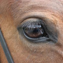 """""""wat zie ik in jou oog"""""""