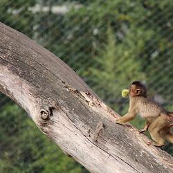 klimmen in de boom