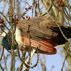Vreemde vogel !!