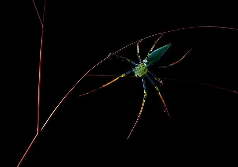 colorfull creature - m'n spinnetje word steeds mooier ...wauw wat een kleurtjes krijgt hijvooral even in het groot kijken