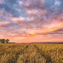 Schitterende luchten boven de graanvelden