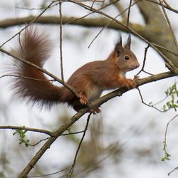 hoog in de boom