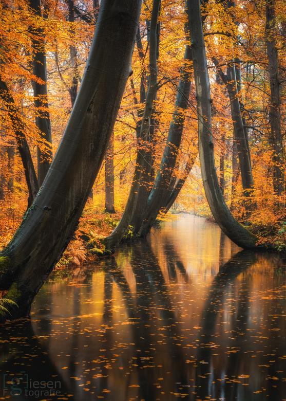 Herfstkleuren in Delden - Een bekende stek voor de natuurfotograaf! Wat een kleuren!