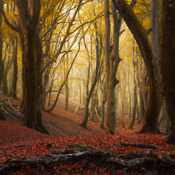 Red root woods