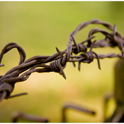 Barb wire...