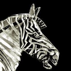 Een zebra in IJs.