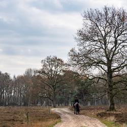 Oudemolensche Bos