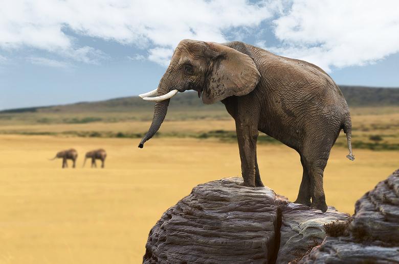 Exodus of the Elephants