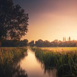 Dutch stream