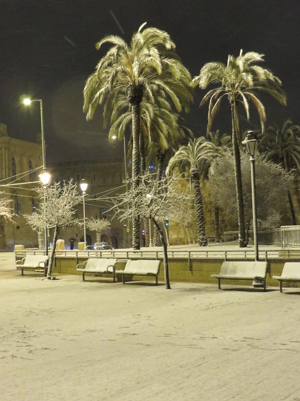palmen in de sneeuw - Jeruzalem palmen in de sneeuw