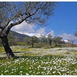 verse sneeuw in het voorjaar