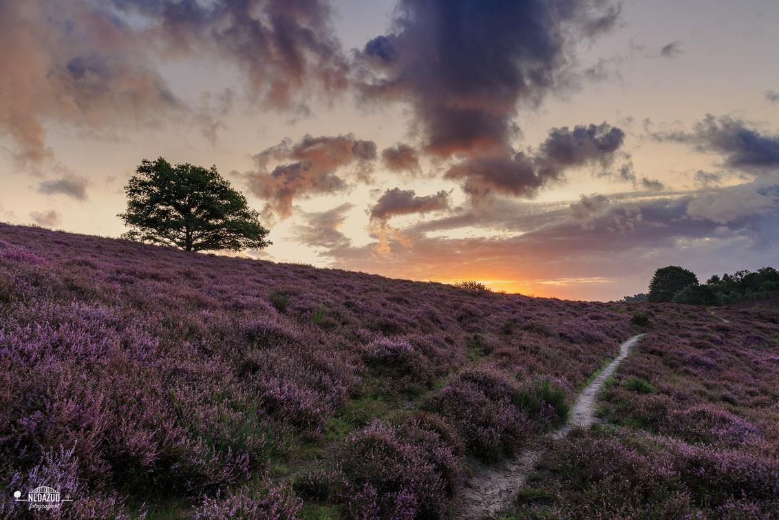 Posbank - de zon is op achter de heuvel #heidekoorts 2