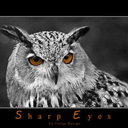 Sharp Eyes...