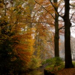 Herfst in de Graven Allee 2