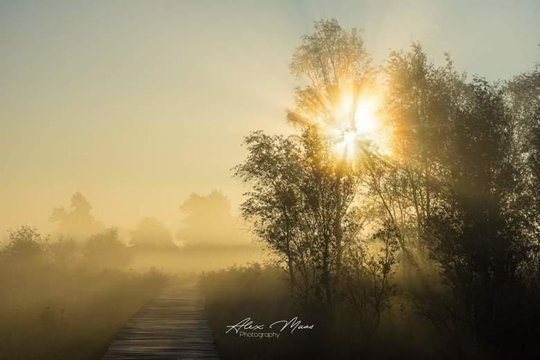 Don't wait for the perfect moment, take a moment and make it perfect  - Prachtige ochtend tijdens gouden uurtje bij De Groote Peel paar weken geleden